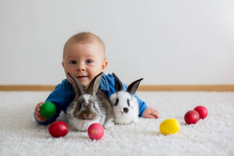 Little toddler child, baby boy, playing with bunnies and easter